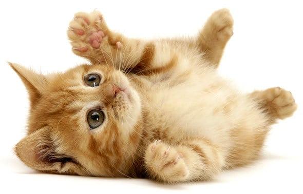 cute-kitty